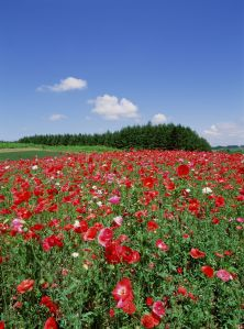 flowersbluesky